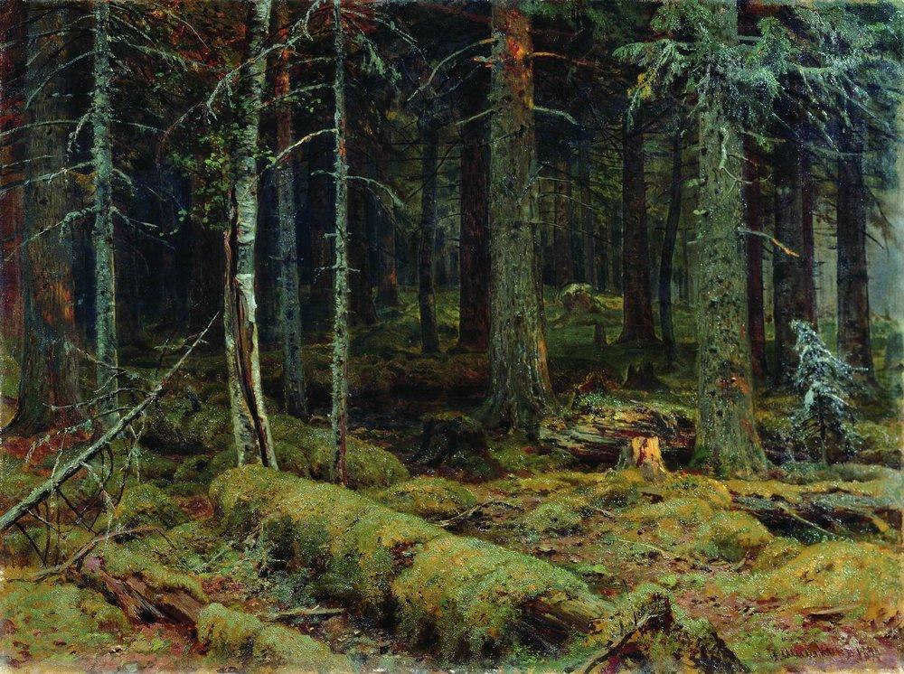 dark-forest-1890